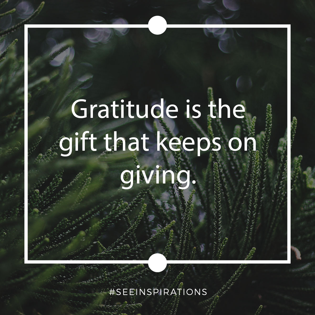 Gratitude is the Gift that Keeps on Giving